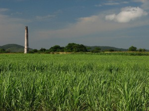 "Sugar cane field and abandoned sugar mill ""La Matilde"" in Camajuani, Cuba"